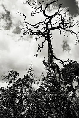 Photograph - Reaching The Sky by Jenny Rainbow