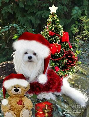 Maltese Dog Christmas Cards Wall Art - Mixed Media - Ready For Christmas by Morag Bates