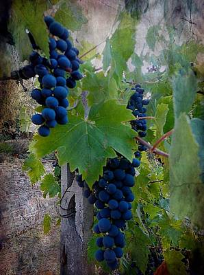 Winemaking Digital Art - Ready For Harvest by Dorothy Berry-Lound