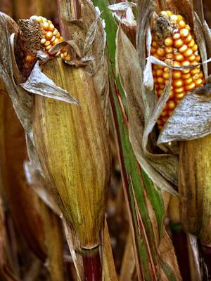 Photograph - Ready For Harvest by Kyle West