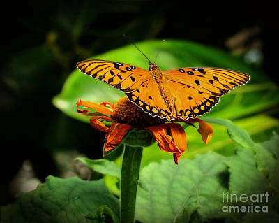 Photograph - Ready For Liftoff by Sue Melvin