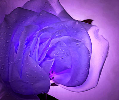 Purple Rose Photograph - Ready For Love by Krissy Katsimbras