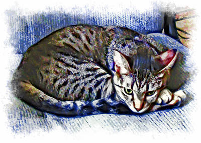 Ready For Napping Art Print by David G Paul