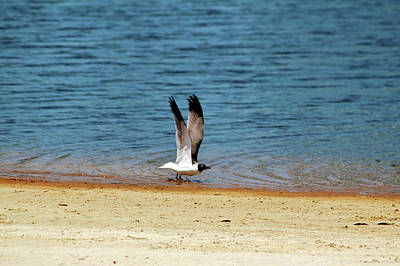 Photograph - Ready For Take Off by Cynthia Guinn
