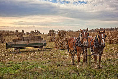 Amish Photograph - Ready For The Days Work by Marcia Colelli