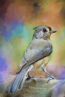 Photograph - Ready For The Morning Bath Songbird Art by Jai Johnson