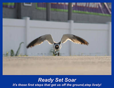 Photograph - Ready Set Soar by Robert Banach