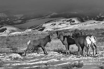 Photograph - Ready To Brawl In Wyoming by Adam Jewell