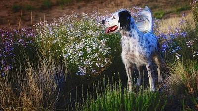 Photograph - Ready To Chase, English Setter by Flying Z Photography by Zayne Diamond