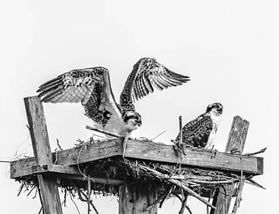 Ready To Fly Bw Art Print