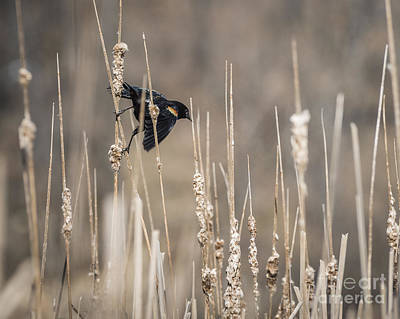 Photograph - Ready To Fly by Joann Long