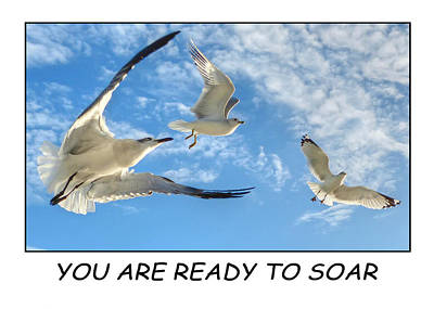 Photograph - Ready To Soar by Geraldine Alexander