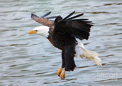 Eagle Photograph - Ready To Strike by Mike Dawson
