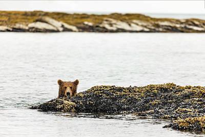 Photograph - Ready To Swim by Mark Harrington