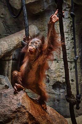 Photograph - Ready To Swing - Orangutan by Nikolyn McDonald