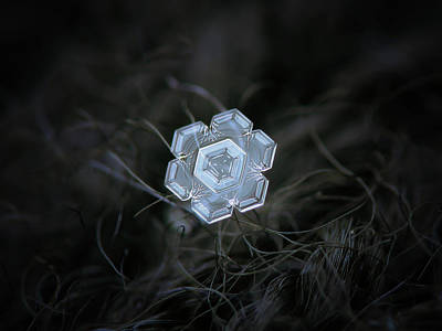 Photograph - Real Snowflake - 29-jan-2018 - 1 by Alexey Kljatov