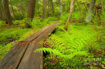 Connecticut Photograph - Realm Of The Black Spruce - Forest Of Moss by JG Coleman