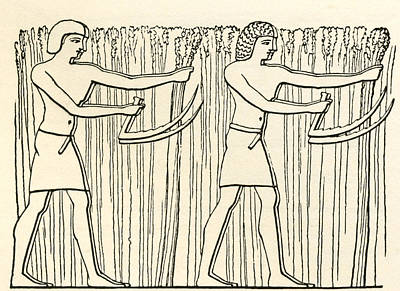Reaping In Ancient Egypt. From The Art Print by Vintage Design Pics