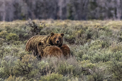 Photograph - Reassurance From Mama Bear #610 by Yeates Photography