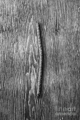 Photograph - Rebar On Wood Bw by YoPedro