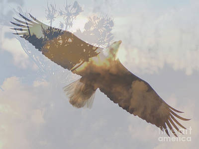 Photograph - Where Eagles Soar by Chris Scroggins