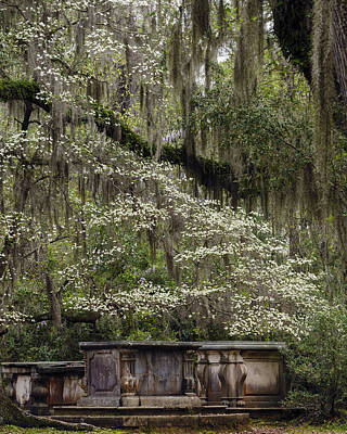 Dogwoods Photograph - Rebirth by Mike Lang