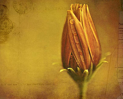 Vintage Flowers Photograph - Recollection by Bonnie Bruno