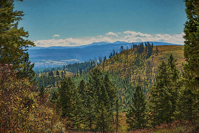 Photograph - Recovery After Fire At Yellowstone by Penny Lisowski