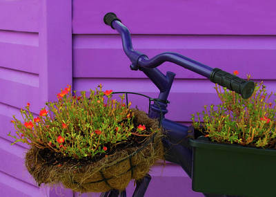 Two Wheeler Photograph - Recycle Repurpose - Bike As Flower Holder by Mitch Spence