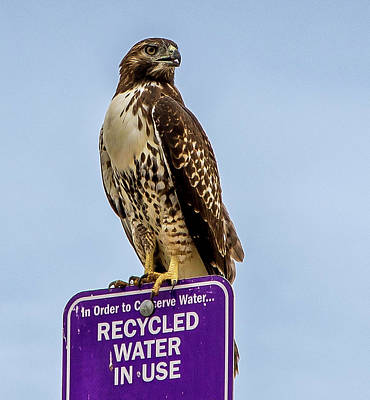 Photograph - Recycled Water by Gene Parks