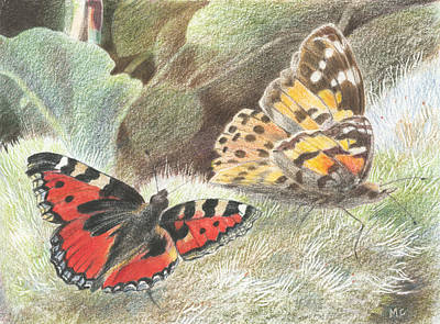 Drawing - Red Admiral And A Painted Lady by Maureen Carter