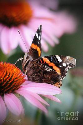 Painting - Red Admiral Butterfly by J McCombie
