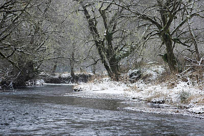 Photograph - Red Alder And Youngs River by Robert Potts