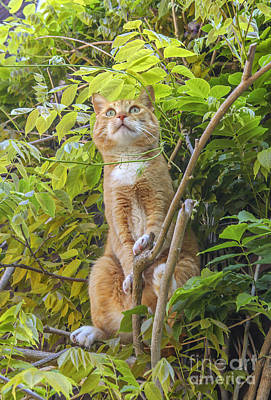 Photograph - Red Alert Cat In Tree  by Patricia Hofmeester