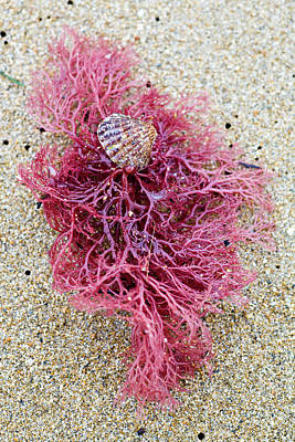 Print featuring the photograph Red Algae by Frank Tschakert