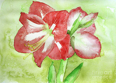 Painting - Red Amarilis  by Jasna Dragun