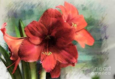 Photograph - Red Amaryllis by Marcia Lee Jones