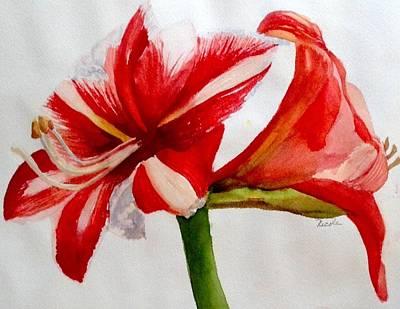 Red Amaryllis Original