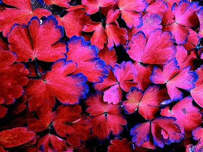 Photograph - Red And Blue Leaves by Colin Drysdale
