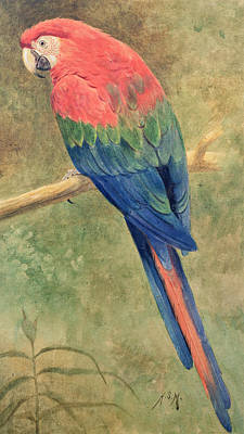 Macaw Painting - Red And Blue Macaw by Henry Stacey Marks