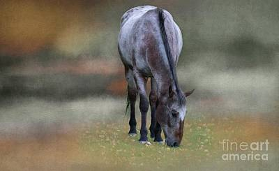 Photograph - Red And Blue Roan by Eva Lechner