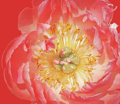 Flora Macdonald Photograph - Red And Close by Ian  MacDonald
