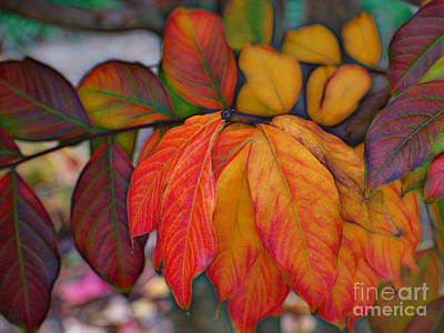 Photograph - Red And Gold Autumn Leaves by Sue Melvin
