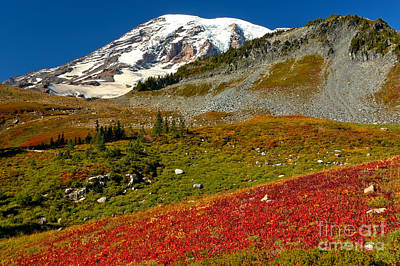 Photograph - Red And Green Below Rainier by Adam Jewell