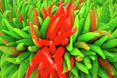 Photograph - Red And Green Chile Peppers by Steven Green