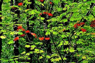 Photograph - Red And Green Fall by Jerry Sodorff