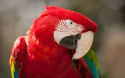 Green Digital Art - Red-and-green Macaw by Maye Loeser