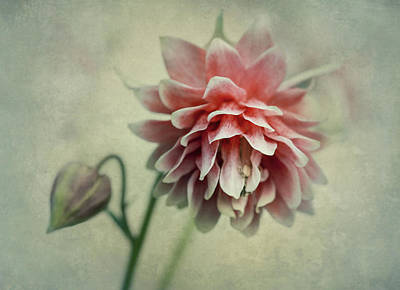 Red And Pink Columbine Art Print