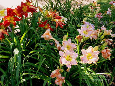 Photograph - Red And Pink Day Lilies by Nancy Kane Chapman