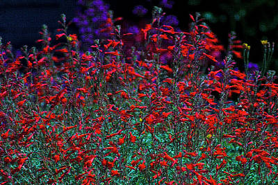 Photograph - Red And Purple Flowers by Yulia Kazansky